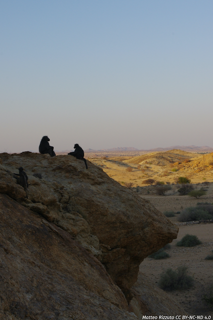 A pair of baboons rests on a sleeping cliff as the sun sets over the Tsaobis riverbed